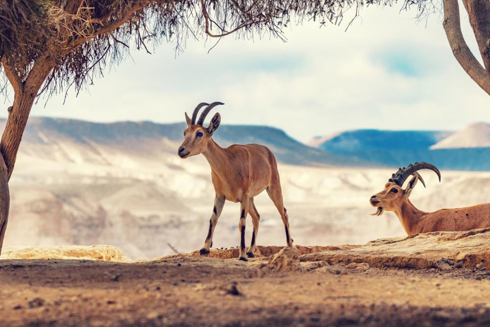 Les animaux à découvrir lors d'un voyage en Egypte
